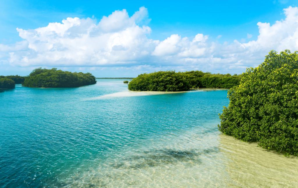 Agua turquesa y manglares en la Reserva de Sian Ka'an, Quintana Roo, unos de los destinos para hacer ecoturismo en México