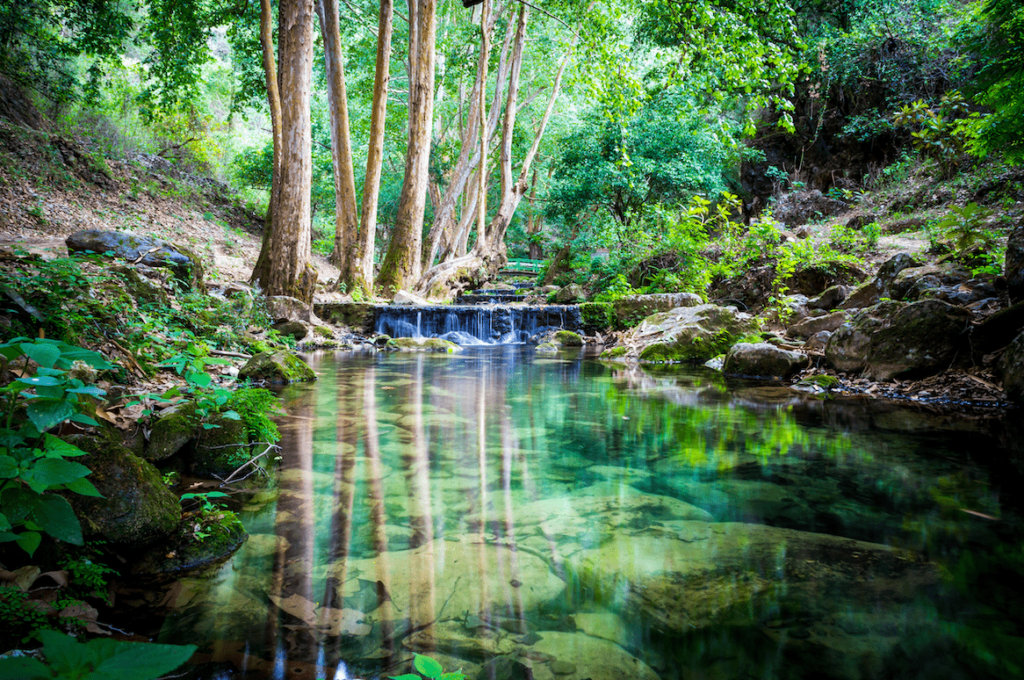 Espejo de agua en la Reserva de la Biosfera Sierra Gorda, Querétaro